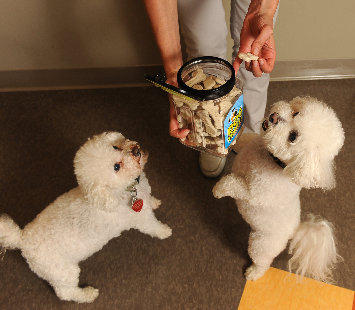 5 Trends in Pet Food Packaging: Products Your Customers Will Beg For